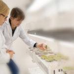 Bioheuris presentó una patente provisional en Estados Unidos que cubregenes de resistencia a herbicidas en cultivos